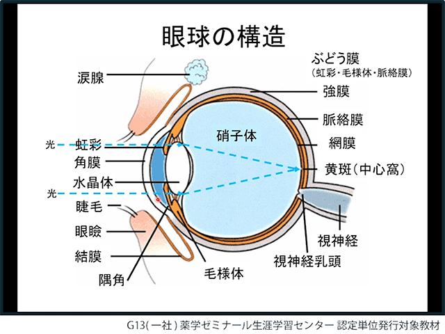 人に教えたくなる眼の構造、疾患と治療